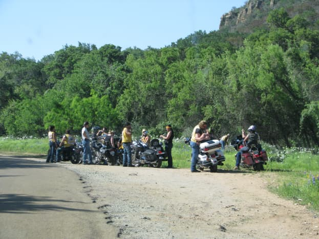 Motorcyclists on a wildflower drive.