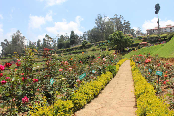 A view of Rose garden