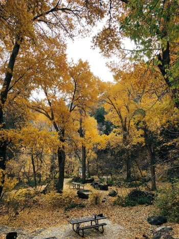 Picnic Benches in Big Cottonwood Canyon