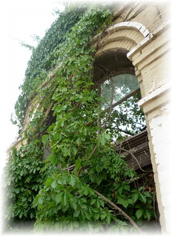 Remnants of an old building now supporting ivy