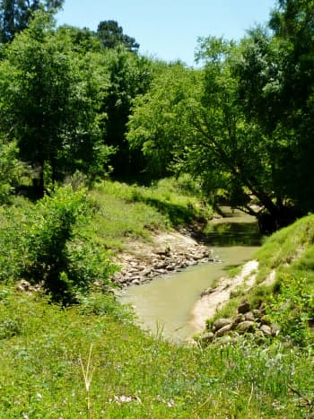 View of Cypress Creek