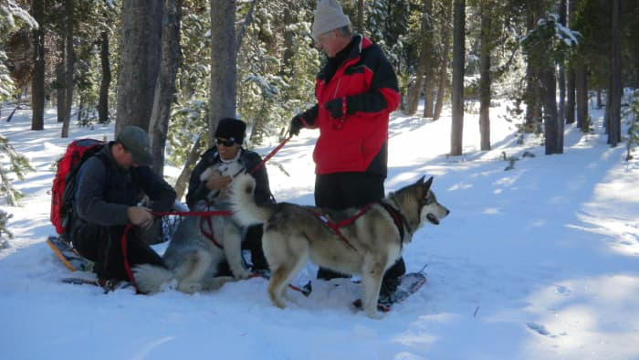 pet-friendly-winter-sports-trails-in-central-oregon