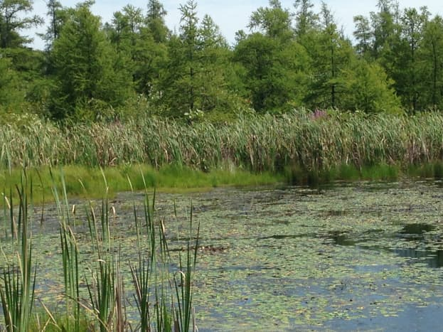 Open water at Volo Bog