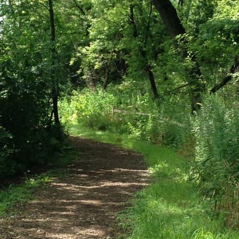 Tamarack View Trail