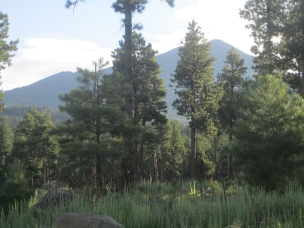 That's Mt. Humphrey's you see, the tallest of the San Francisco Peaks at 12,633 feet. The peak is 4.5 trail miles from Hart Prairie Lodge.