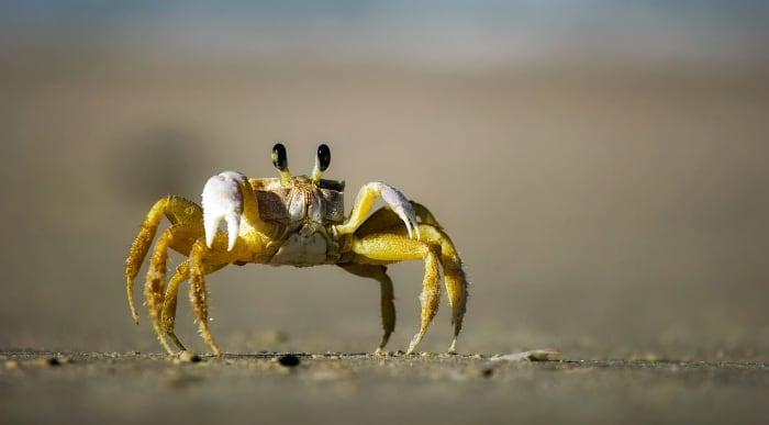 the-beachcomber-a-poem