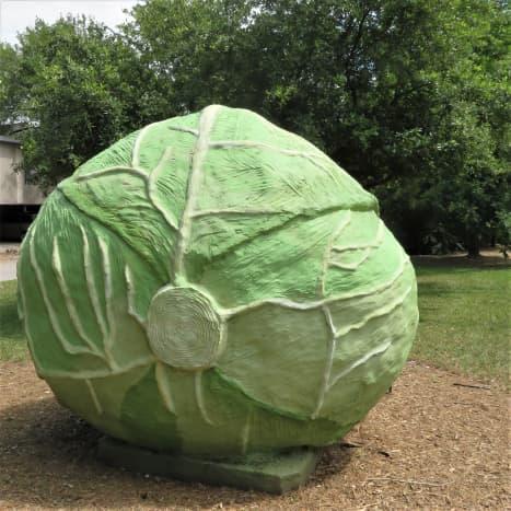 'Big Cabbage' by Bill Davenport