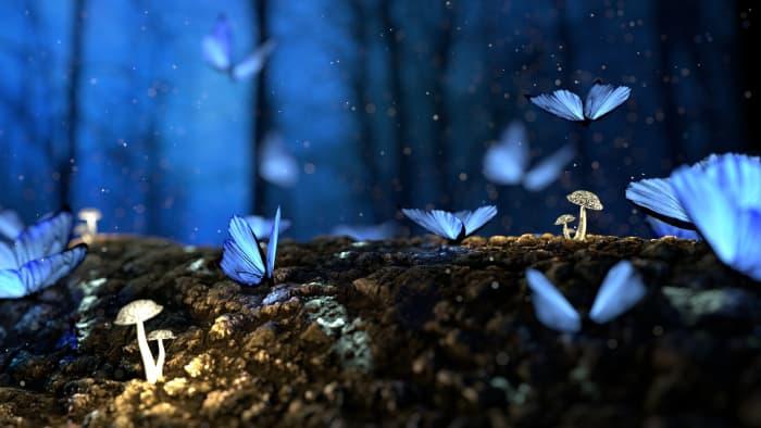 Butterflies and Mushrooms