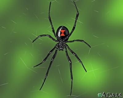 Female Black Widow Spider