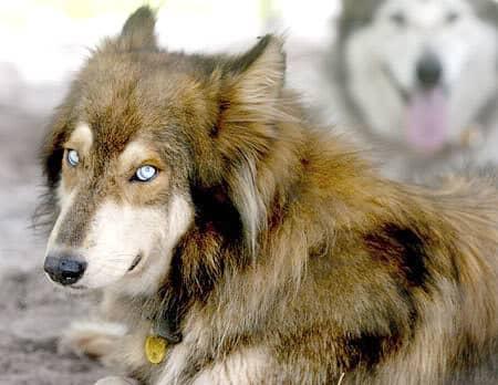 The Sulimov dog