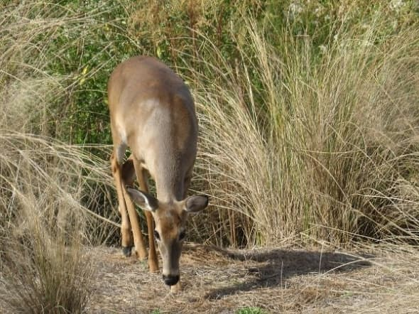 wildlife-golfcourse