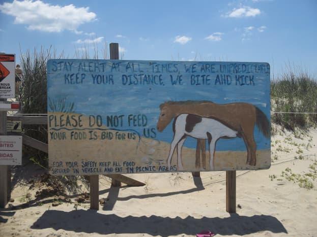 Beware of the biting horses!