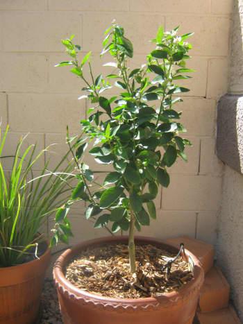 Aww, it was a cute li'l tree back on April 5, 2012.