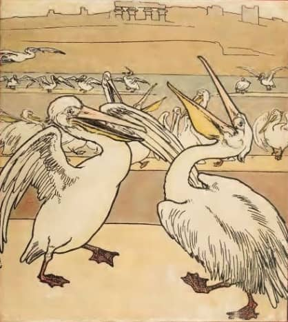 The Pelican Chorus - title