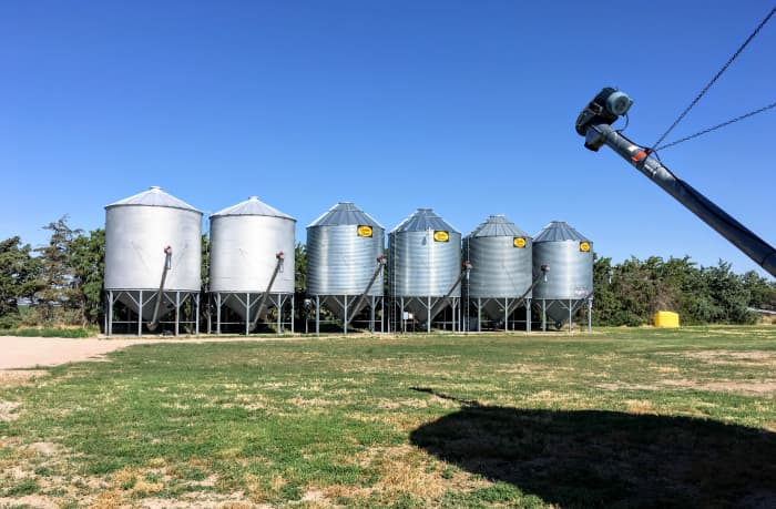 This row of bins was erected just inside a well-established windbreak, which flanks it on the west. There is room to run trucks, as well as room for a harvest crew to park RVs and equipment.