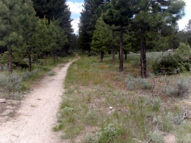 One of the many trails