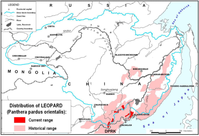Distribution of the Amur leopard