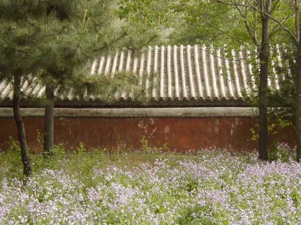 There was a carpet of purple wildflowers when I visited this temple (Tanjiesi) on the far west side of Beijing in the spring.