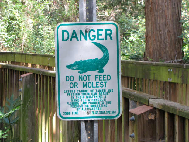 Don't feed the alligators!