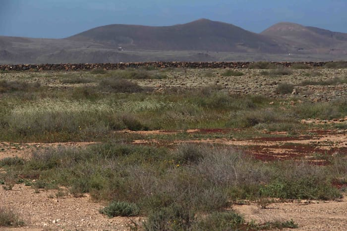 The scenery of northern Fuerteventura, where low hills give way to flat and scrubby plains of the kind illusttrated here