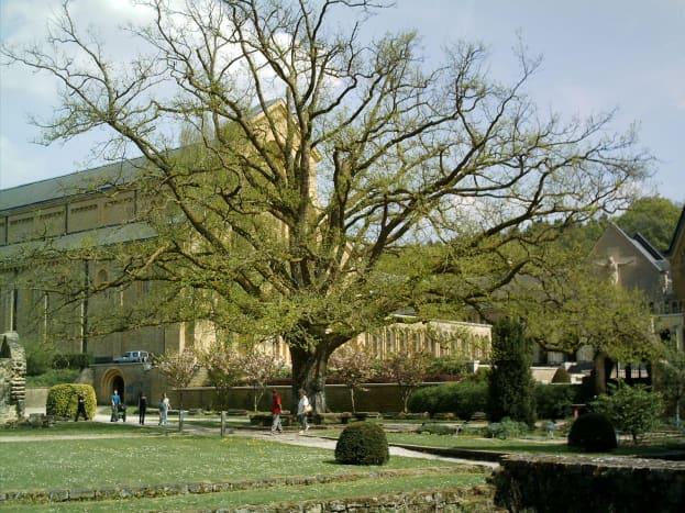 Under the oak tree, where Nostradamus used to sit, near the botanical garden...