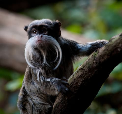 the-prettiest-animals-never-known