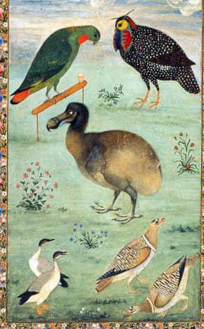 Dodo among Indian birds, by Ustad Mansur, 1625