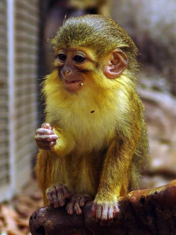 top-30-cutest-animals-in-the-world