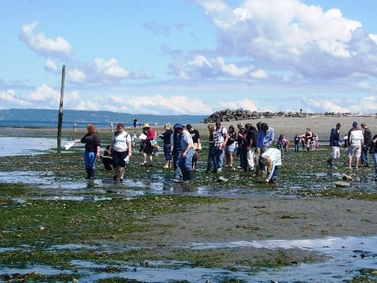 Beach Rangers and volunteers at Edmonds Marina Beach are available to lead groups and provide information about the beach at low tides.