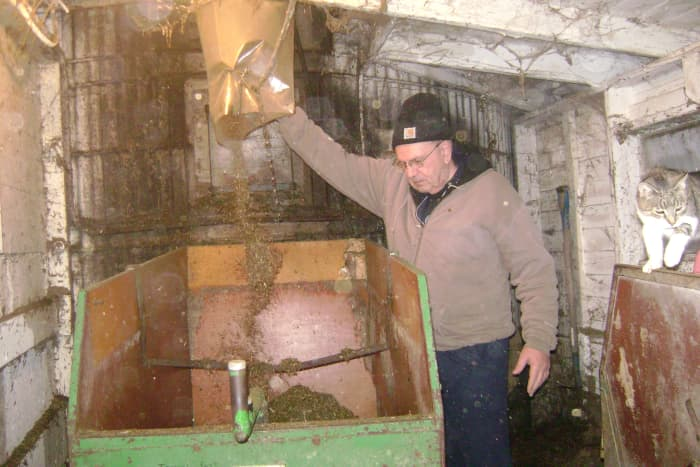 Haylage Coming Down From a Silo into a Cart