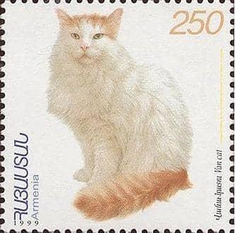 turkish-van-cat-breed