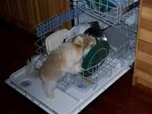 Just helping with the dishes