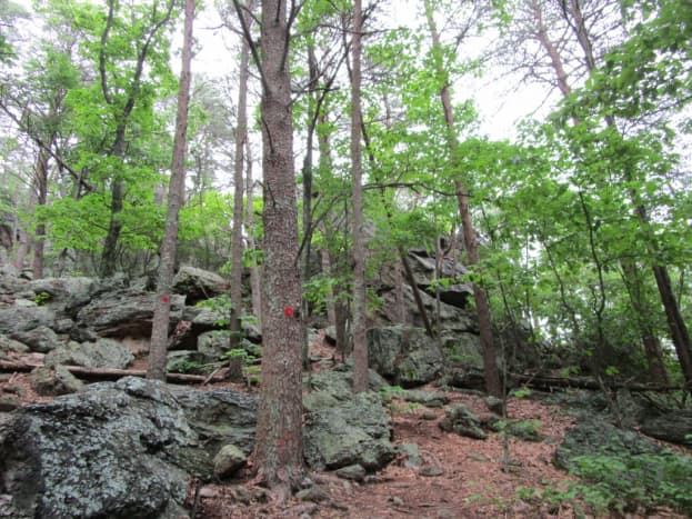 This is the view of the large rockface as you begin to climb on the Rocktop Trail.