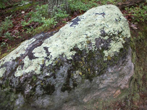 Along the Ridgeline Trail, whether it is summer or winter, this particular rock with the lichen always remains the same! Crowders Mountain State Park Kings Mountain, NC