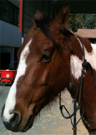 Remove the halter and re-attach to the horses neck. This will prevent the horse from walking away.