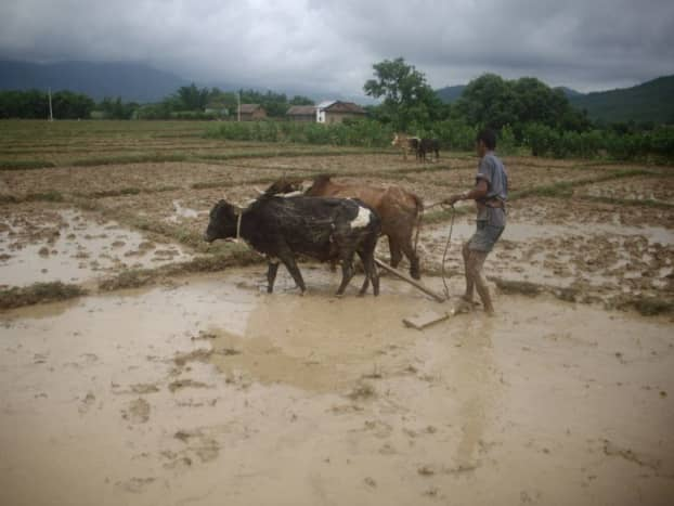 Agriculture technique in Nepal has not improved in two thousand years. The same kind of wooden plow pulled by oxen and driven by human is used in farming. No surprise, why agrarian economy imports food.