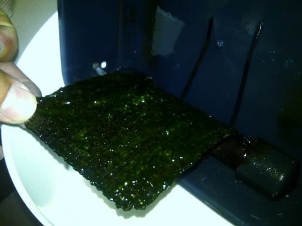 This is the back side of my algae screen. It is really green because I had turned the screen around 2 days prior. But I removed it to clean it because the hair algae growth was too long and it was sticking out of the scrubber! (9/9/12)