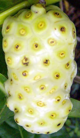the-health-benefits-of-noni-fruit