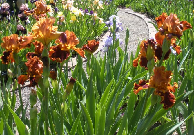burnt-orange-or-rust-colored-flowers-a-gallery