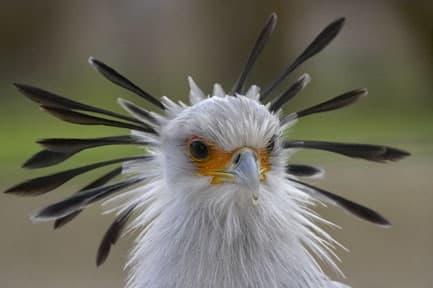 5-birds-with-some-fun-headgear