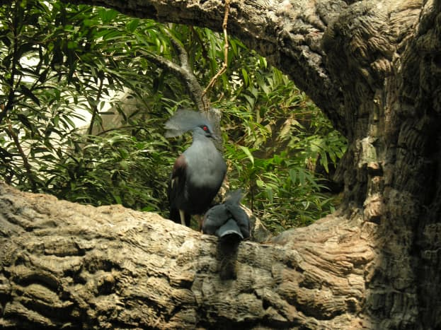 A bird at an indoor enclosure shared with guests, July 2008.