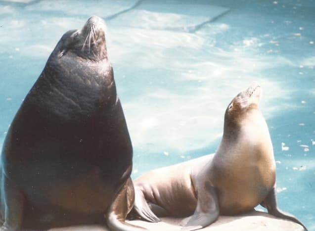 Seals at the North American exhibit