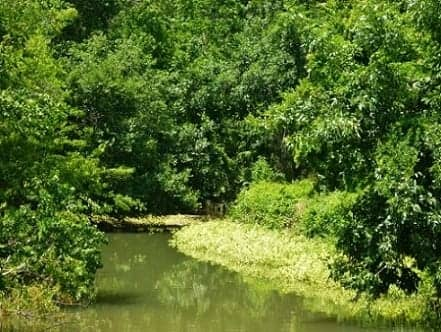 Waterway in Bear Creek Park