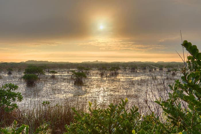 Mangroves in the Everglades.