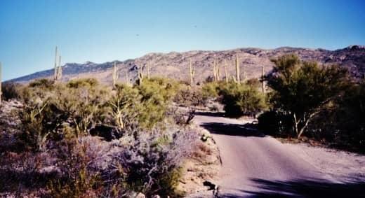 Road through the Saguaro National Park