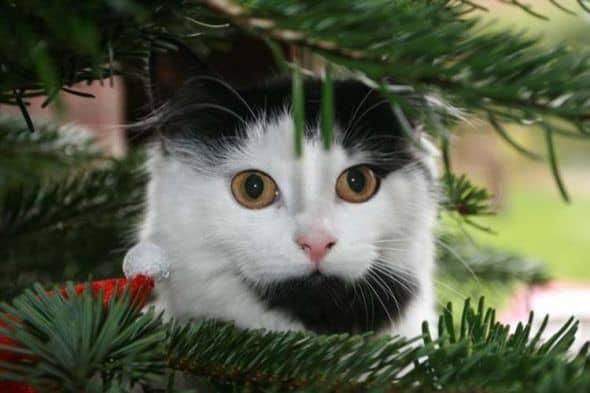 Dippy Christmas Tree