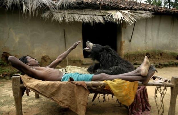 A pet Indian Sloath Bear