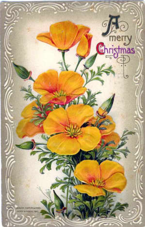 Yellow poppies vintage Christmas card