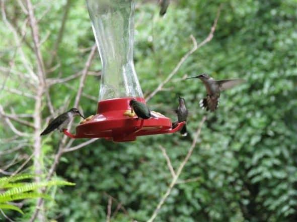 fall-hummingbirds
