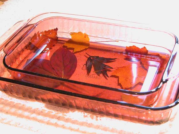 Preserving autumn leaves in glycerine